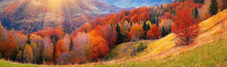 отдых Карпатах осенью